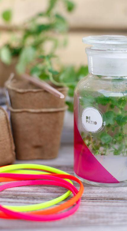 Las plantitas Depatio le dan un toque verde a tu depto, oficina o  donde quieres colocarlas!!! más info www.tiendadepatio.cl