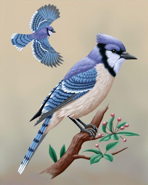 59 Best MICHIGAN Birds: Cardinal, Grosbeak, Tanager
