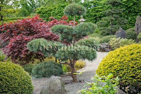 9 best У роз images on Pinterest | Front yards, Landscaping and Plants