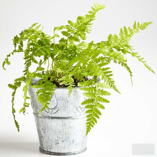 If you're working on creating a fairy garden or terrarium, these are the perfect tiny plants to use. This roundup of small plants will make your miniature landscaping plans a breeze.