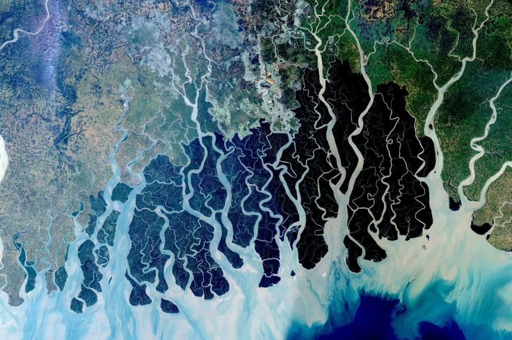 Satellite image of the Sundarbans coastal forest in Bangladesh, which is habitat for the endangered Bengal tiger.