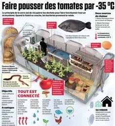 La simple chaleur du compost permet de faire vivre tout un écosystème alimentaire.