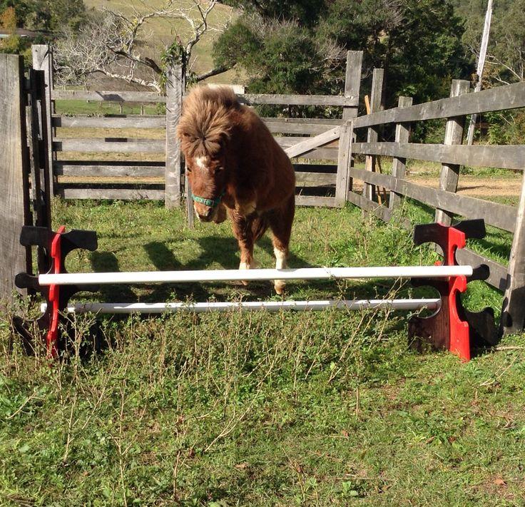 Small pony jumping