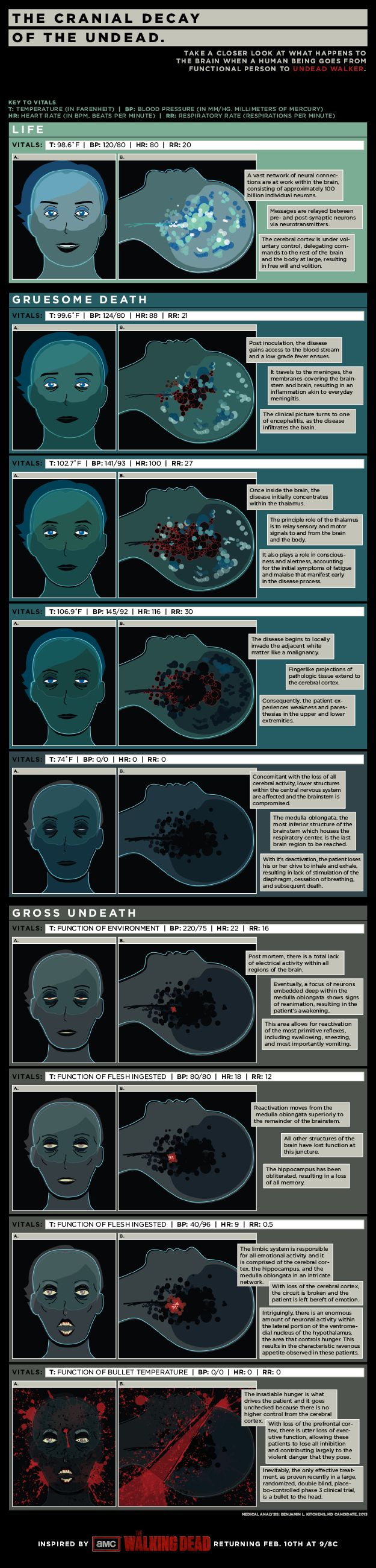 Infographic: Check Out The Anatomy Of A Zombie's Brain from a psych per deprecating this actually makes sense