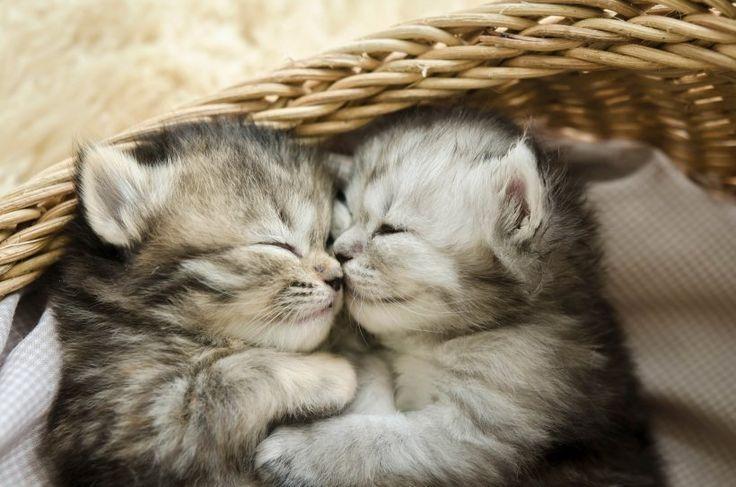 Katzenfotos: Die süßesten Katzenbilder – Die süßesten Tierbabys – Katzen