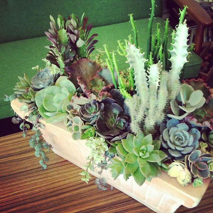 Mejores 99 im genes de eventos en pinterest arreglos - Como transplantar cactus ...
