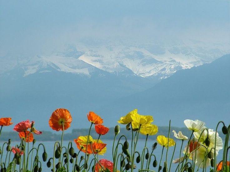 Стипендии и гранты на обучение в Швейцарии