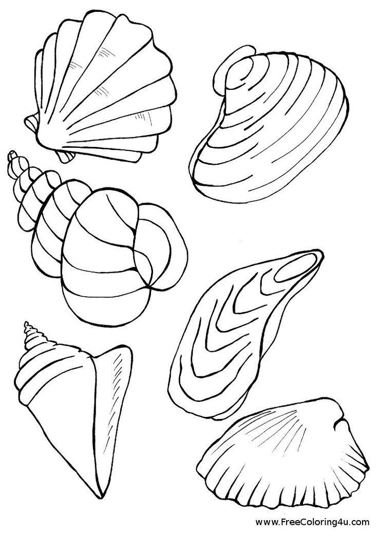 Free Shells Starfish Coloring Pages Sketch Coloring Page