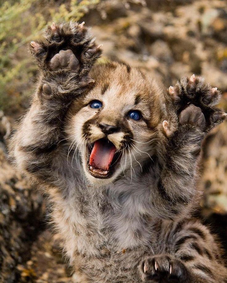 Great Wild Animals Photos