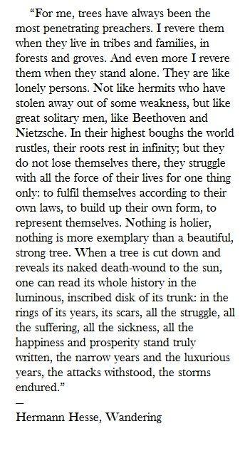 trees  Hermann Hesse   Wandering