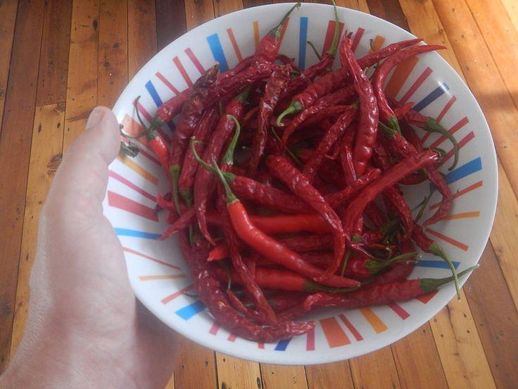 Chili pepper harvest..