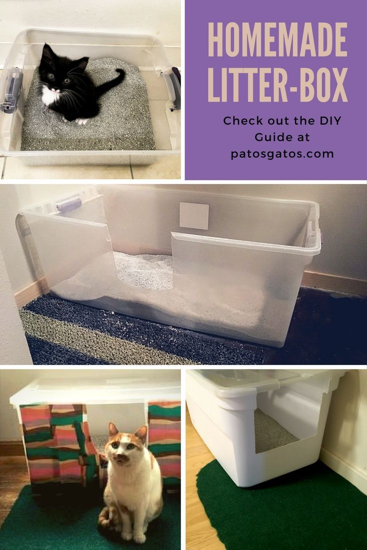 Make Your Cat The Ultimate Litter Box Check Out This Easy How To Guide To Stop Hating Your Litter Box Rumah Kucing Kucing