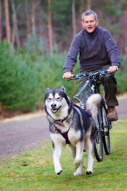 A starter kit including everything you need to get started bikejoring with either 1 or 2 dogs. Bikejor is the sport of running your dog on your bike and is another great way to get out and exercise your dog. http://www.snowpawstore.com/active-dog-gear/bikejoring/bikejoring-starter-kit.html