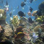 The Basics of Keeping Live Aquarium Plants in Freshwater - Pets