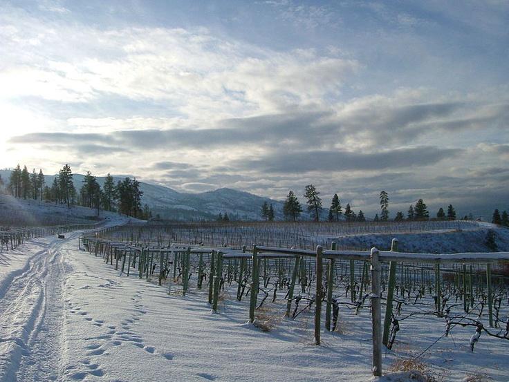 Kelowna winery in winter -- Curated by: Neufeld Jones | 103-1553 Harvey Ave, Kelowna, BC V1Y 6G1 | 250-717-5027
