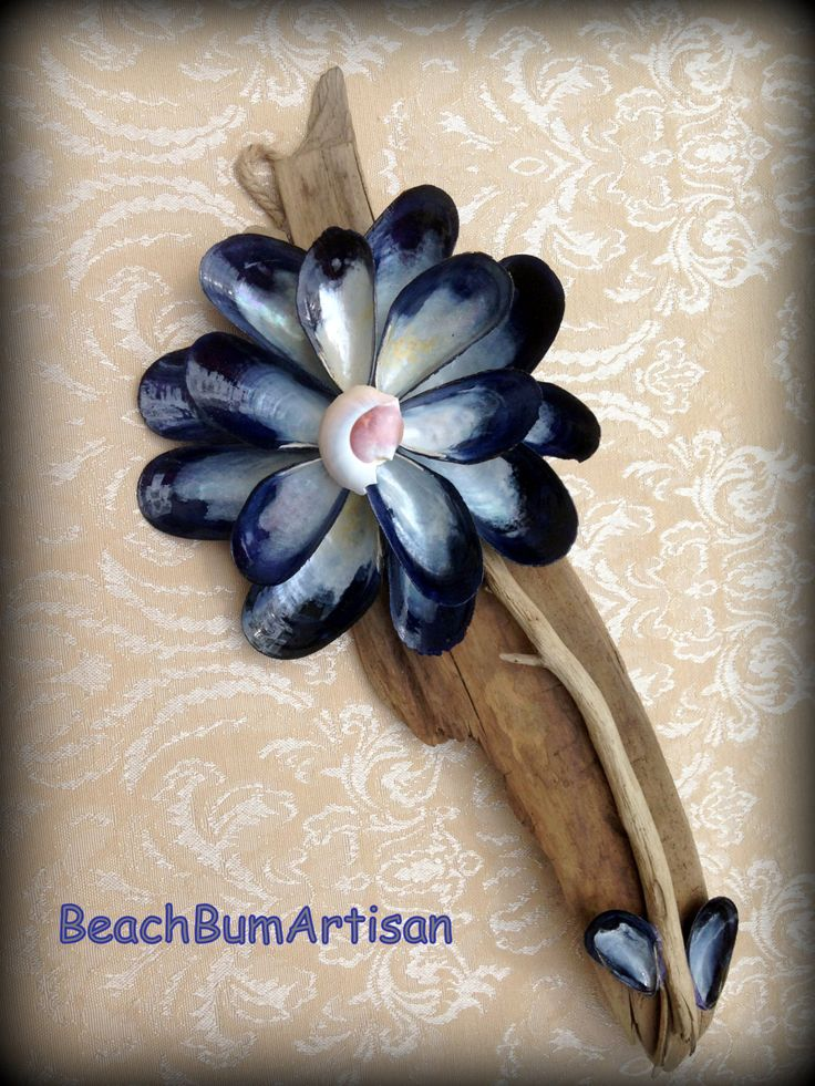 Driftwood and mussel shell wall plaque by BeachBumArtisan on Etsy