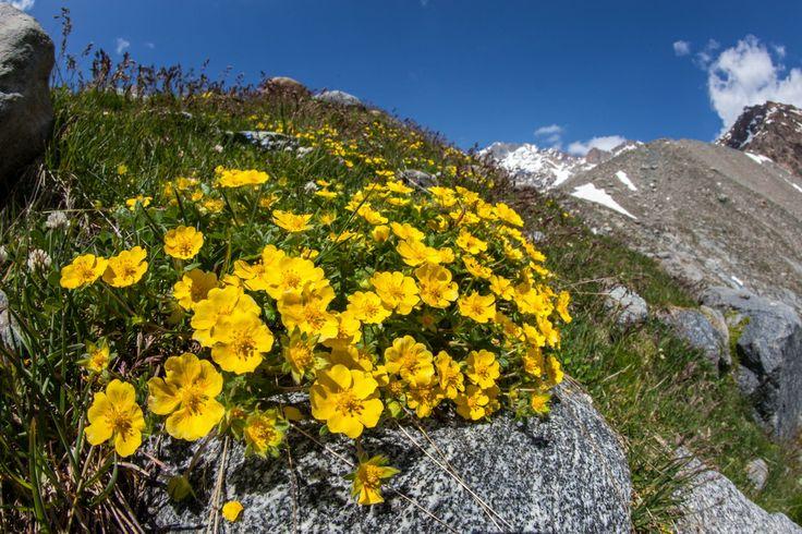 A Preda Rossa in Valmasino i fiori hanno i colori del sole!