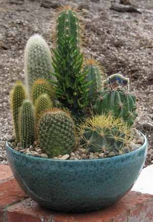 I AM A BAD PLANT PERSON, BUT I'D LIKE TO TRY SUCCULENTS AND CACTI