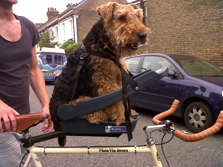 Dog Seats For Bikes Amazing Decorating Ideas With Buddy Rider Bike