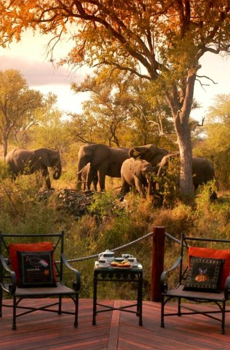 Safari Lodge - Kruger National Park, South Africa.
