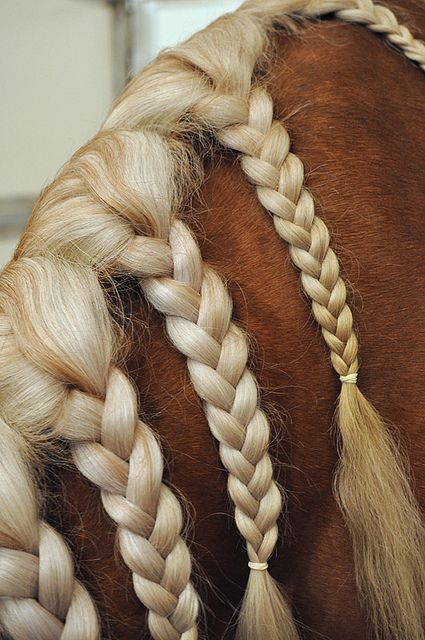 braided mane <3  Gorgeous colors together!
