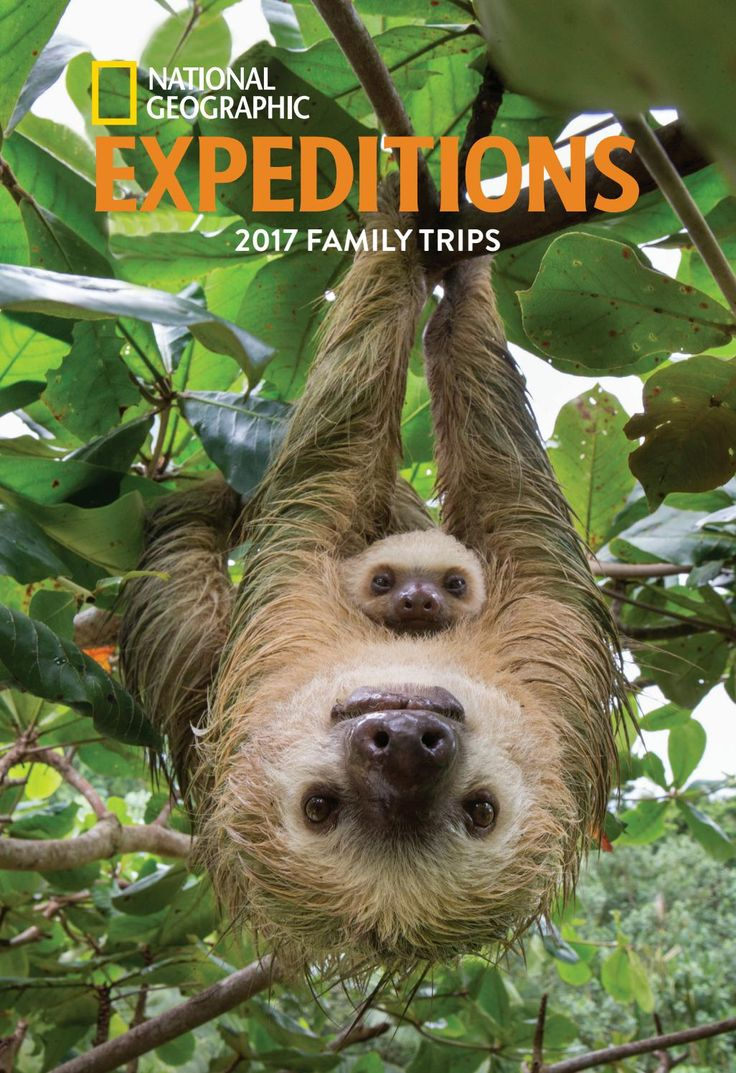 2017 National Geographic Expeditions Family Trips by National Geographic Expeditions - issuu