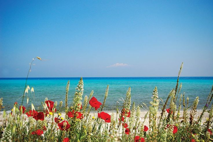 Spring is here! #lefkadaslowguide #lefkadazin #lefkada #lefkas #spring #poppy #flora #sea #beauty #holidays