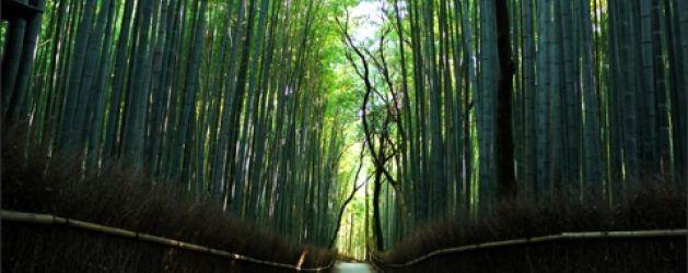 Tempat Wisata Gratis di Kyoto - Info Wisata dan Liburan di Jepang