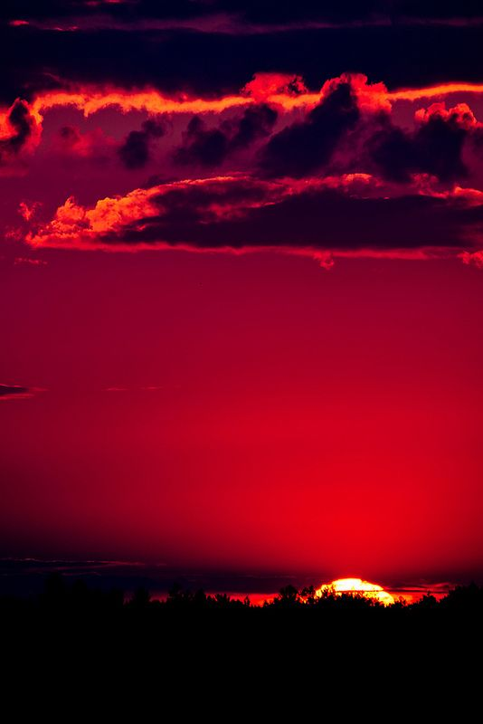 Blood red pale skin moon light draw me in quench my thirst coursing veins let my body feel no pain