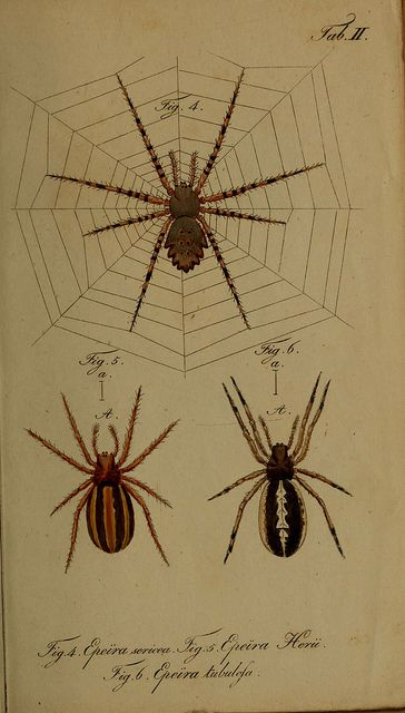 dendroica:    n6_w1150 by BioDivLibrary on Flickr.