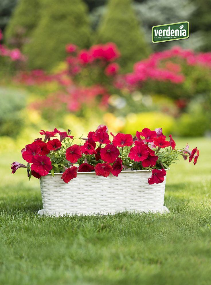 #rattan #ratan #doniczkabalkonowa #kwiatybalkonowe #garden #taras #doniczkaratanowa