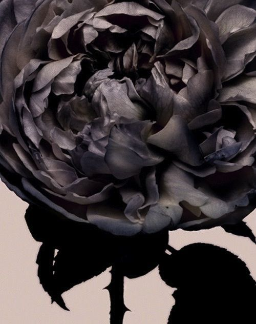 Flora, photographed by Nick Knight.
