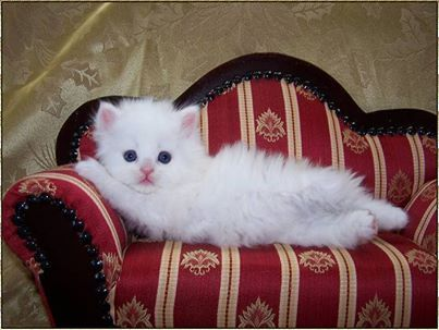 All cats love a cushioned couch.