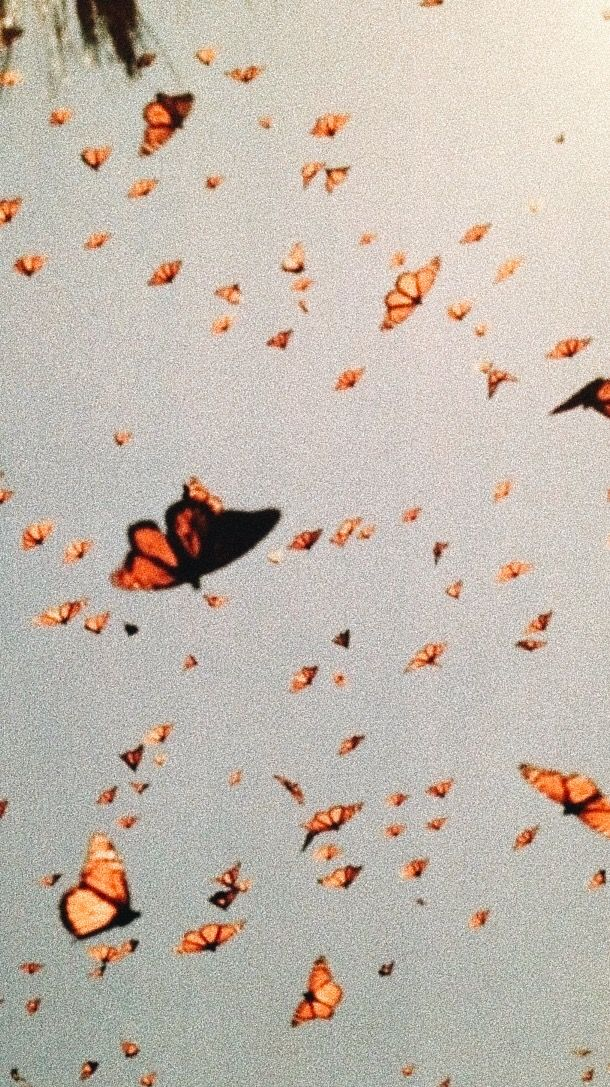 Pin By Gracie Hoggan On A R T S Y Iphone Wallpaper Vintage Aesthetic Iphone Wallpaper Butterfly Wallpaper