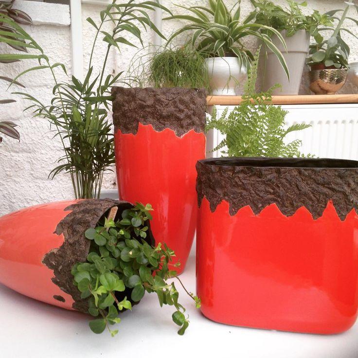 5€ le vase, 3 tailles, 2 coloris rouge ou rose...choisissez le votre