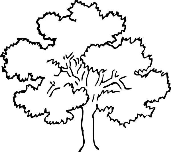 Simple Coloring Pages Oak Tree Clip Art Vector