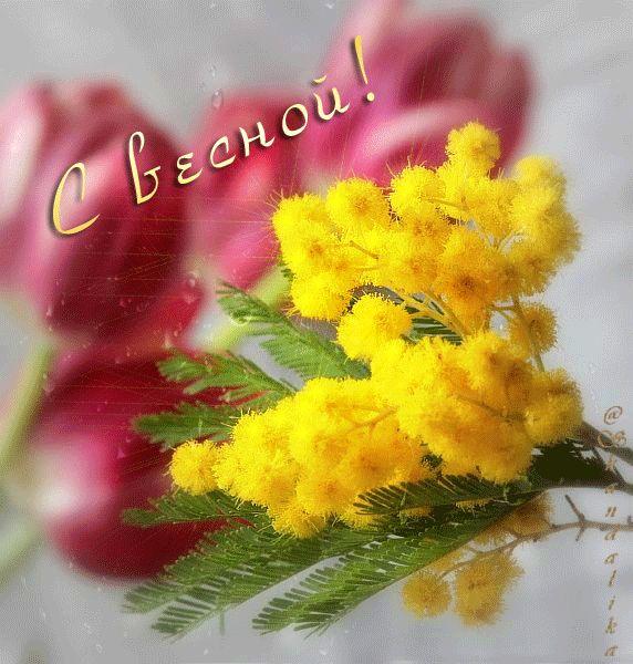 С весной! (тюльпаны и мимозы) - анимационные картинки и gif открытки
