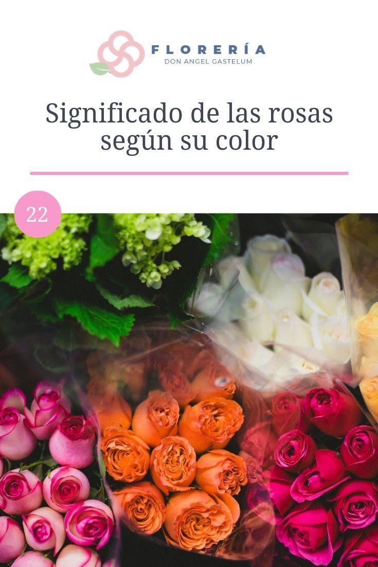 Significado De Las Rosas Según Su Color Significado De La Rosa Rosas Regalos Rosas