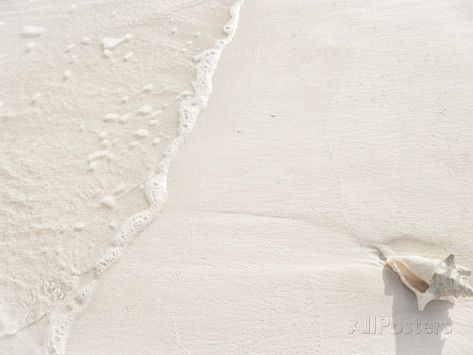 Conch Shell Washed Up on Grace Bay Beach, Providenciales, Turks and Caicos Islands, West Indies Photographie par Kim Walker sur AllPosters.fr