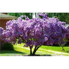 Shade Garden Under Tree Pine