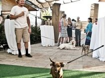 Bardessono Napa Valley Ca Pet Friendly