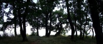 (10) kladOS - un desktop Internet cu focus pe Natura
