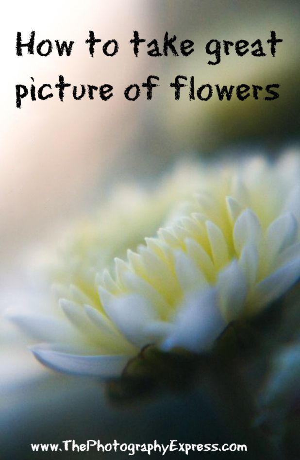 How to take great picture of flowers | www.ThePhotographyExpress.com