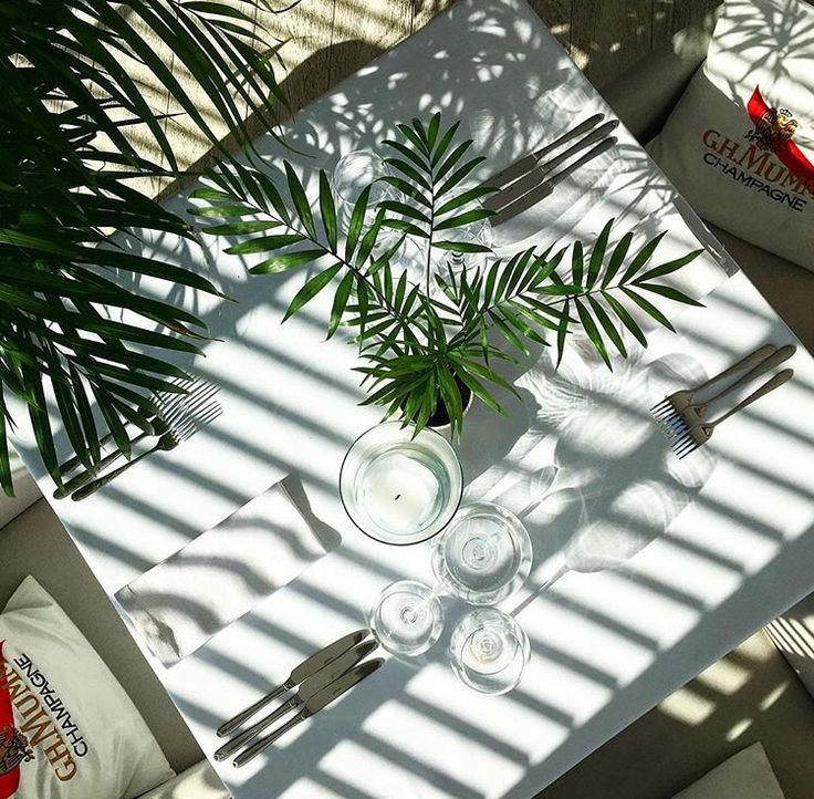 Table presentation at restaurant with palm trees  @ Dune Restaurant Cafe Lounge in Mielno, Poland
