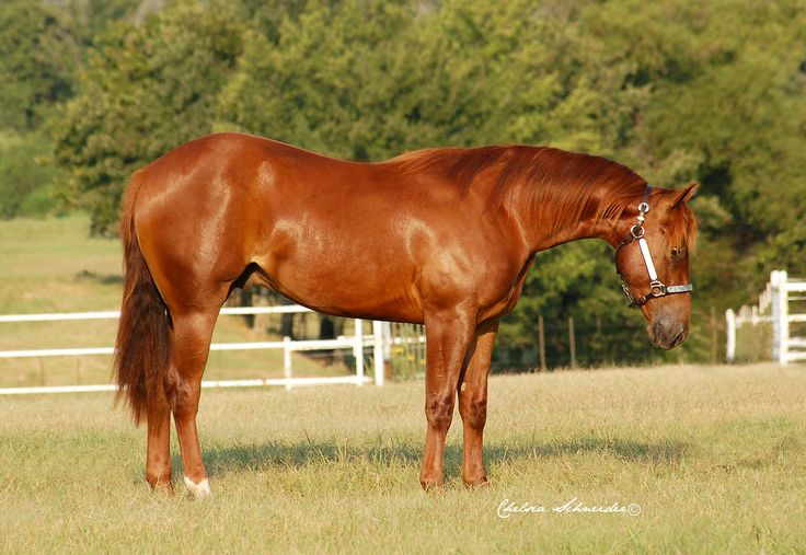 tags special nite � 2012 sorrel stallion gunners special