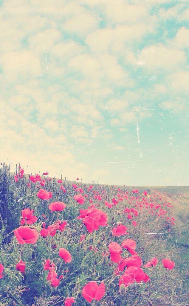 おしゃれ☆花畑と空iPhone壁紙 iPhone 5/5S 6/6S PLUS SE Wallpaper Background