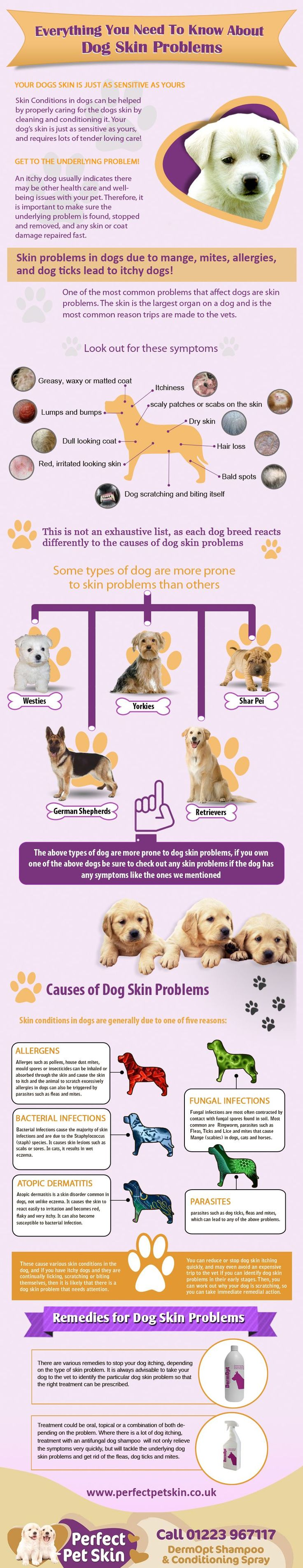 Dog skin problems are very common. This infographic will help you understand what might be the problem with you dog, and more specifically what the pr