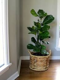 1000 Images About House Plants For House Warming So Cool On Pinterest Shops Fiddle