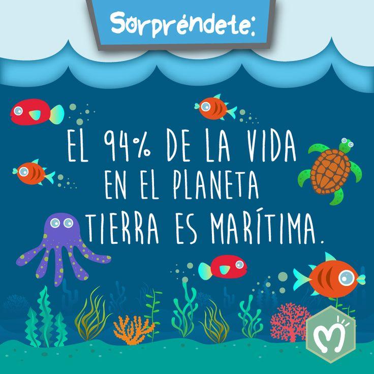 El 94% de la vida en el Planeta Tierra es marítima. #Océanos #Agua #Planeta #Tierra #MigasTienda #M