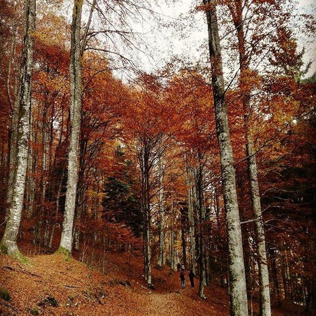Il bosco si prepara per l'inverno